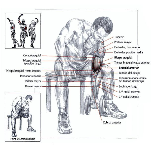 curl-de-biceps-concentrado-con-apoyo-en-el-muslo-2big