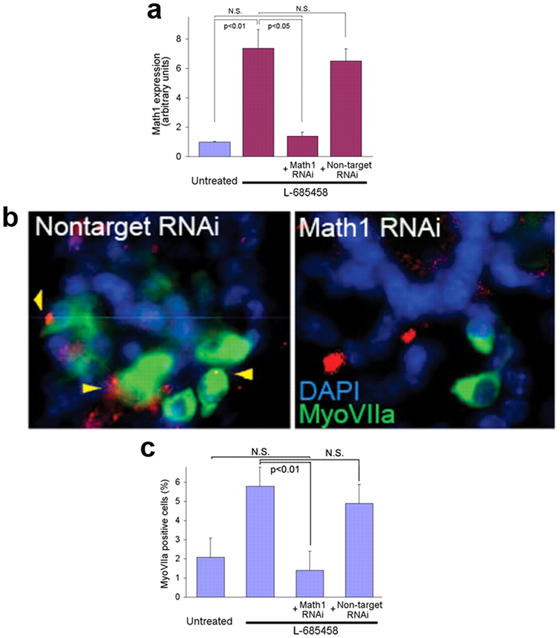 Notch Signaling Alters Sensory Or Neuronal Cell Fate Specification Of Inner Ear Stem Cells