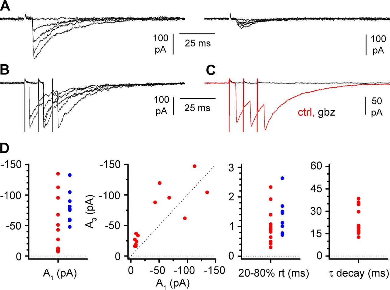 Novel Gabaergic Circuits Mediating Excitation Inhibition Of Cajal Retzius Cells In The