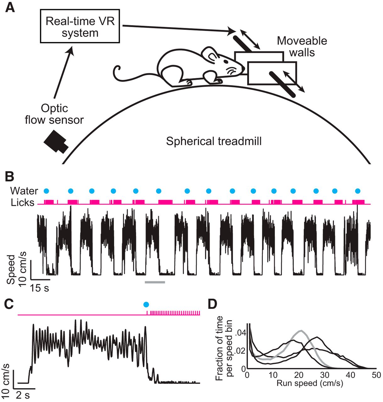 Natural Whisker Guided Behavior By Head Fixed Mice In