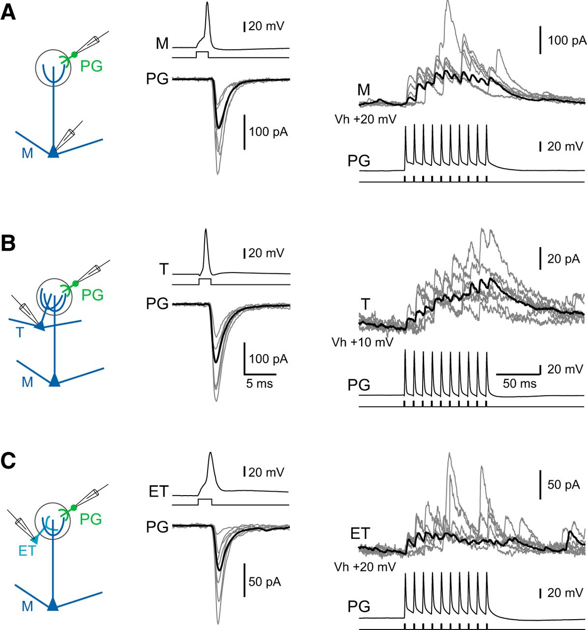 Intraglomerular Lateral Inhibition Promotes Spike Timing