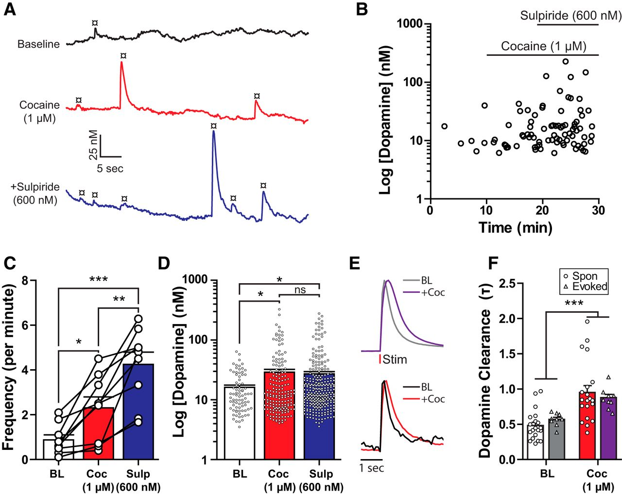 Cholinergic Interneurons Underlie Spontaneous Dopamine Release In Nucleus Accumbens