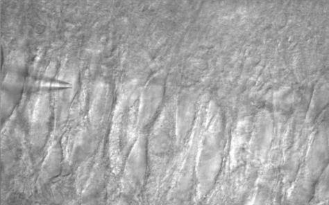 AcquCAM 23S_(CA3 pyramidal neuron)