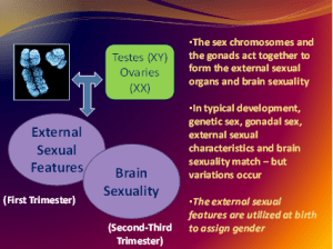 Phenotype and Brain Sexuality