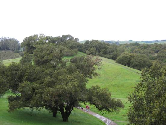 A photo of the bucolic views at Westwood Hills in Napa, CA where Joan Jakel regularly hikes and walks her dog after she created her inspired life.