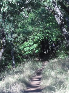 An image of a trail with high grasses on each side and it leads into a forest