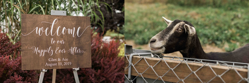 Goats at Falling Water Gardens in Monroe. Photographs by Joanna Monger Photography, Snohomish's Best Wedding Photographer.