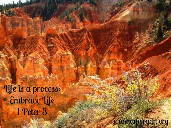 Embrace Life by Joanna Morgan 10-16-13 Blog