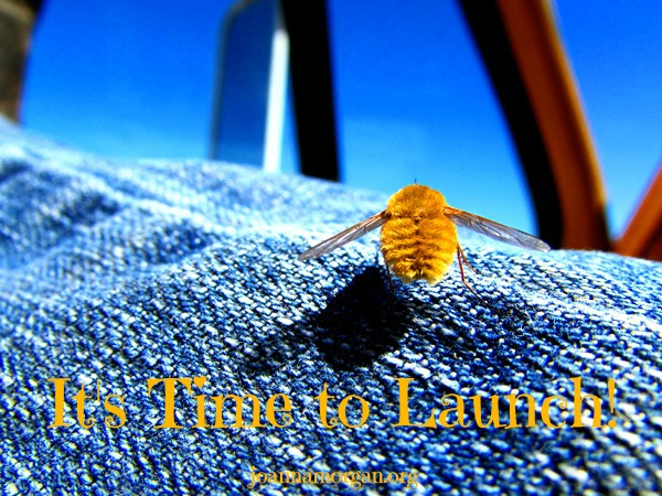 Time to Launch by Joanna Morgan 11-22-13