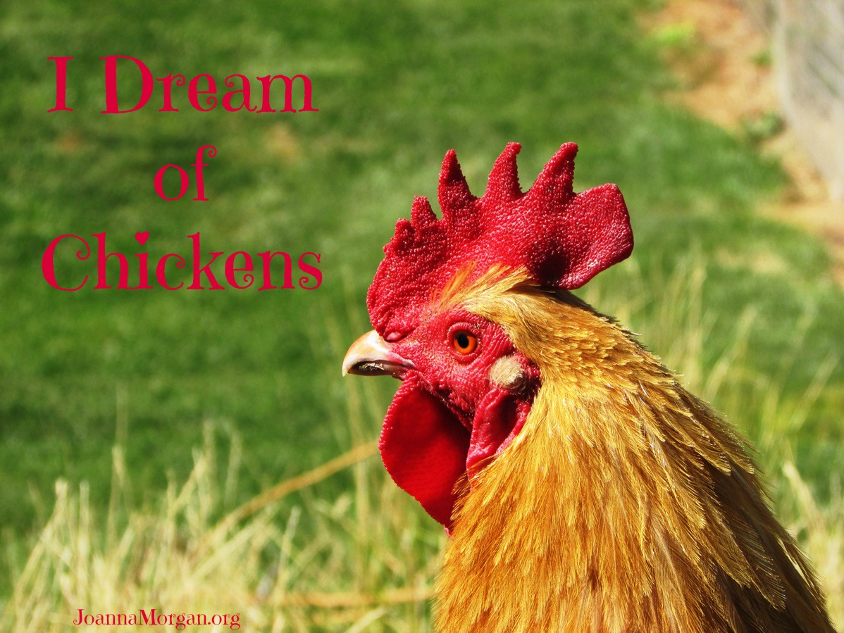 I Dream of Chickens by Joanna Morgan