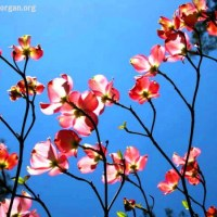 Move Forward – It's Time To Bloom