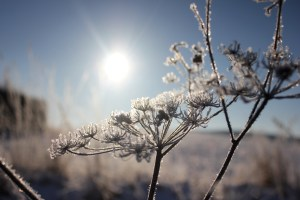 Cup 'O Morning: Sun on Frost