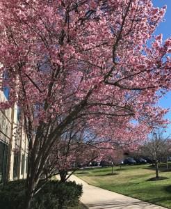 February Blossoms