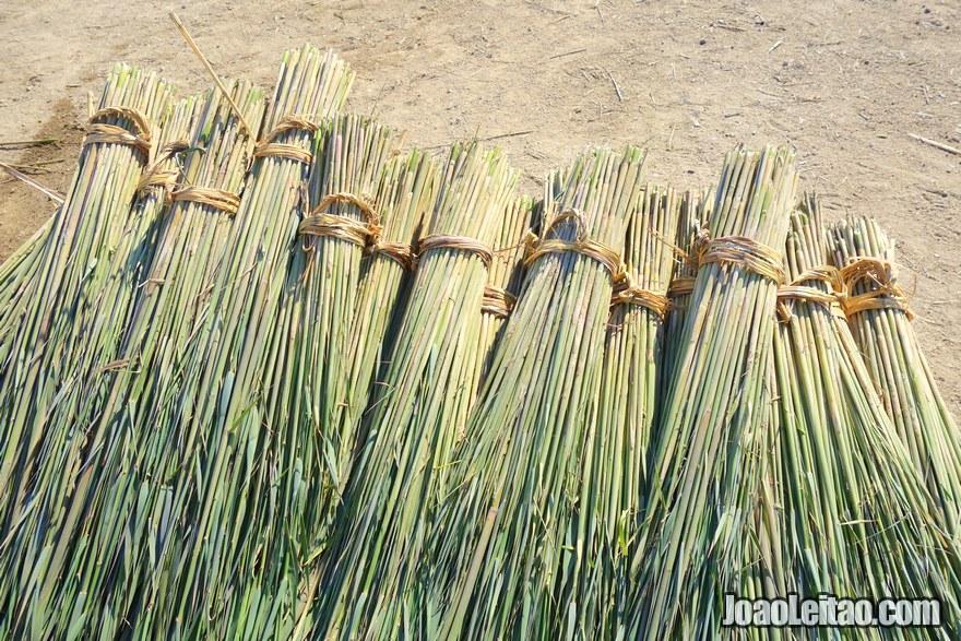 As canas colhidas das zonas húmidas
