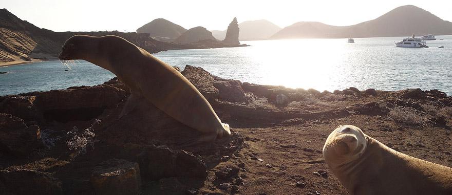 Leões-marinhos na Ilha de Bartolomé nas Galápagos