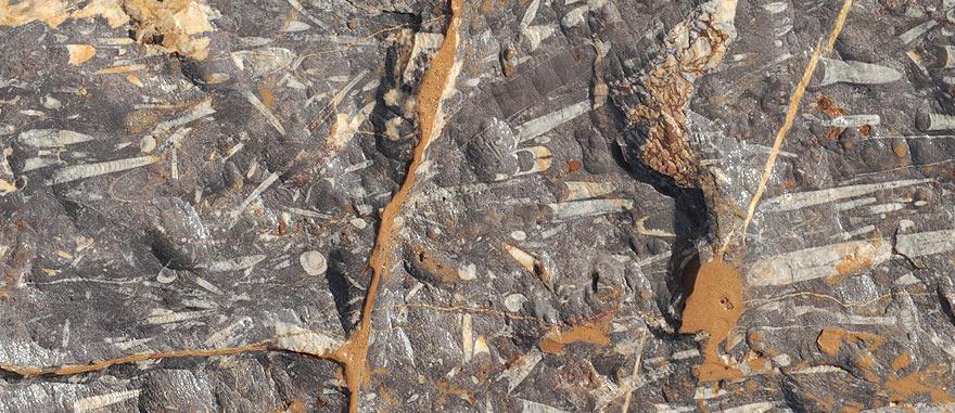 Fossils on rocks - Mind-blowing Sahara Desert Hotel