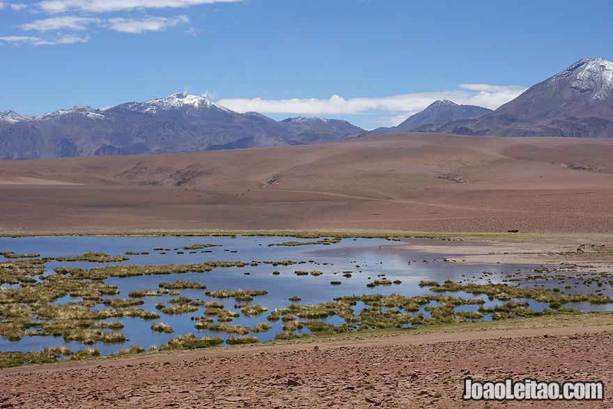 Gorgeous Landscape in Atacama Photo