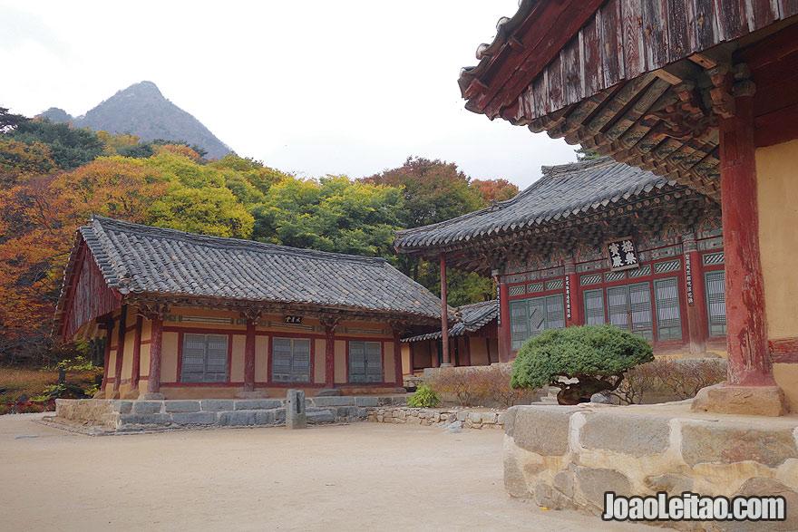 Visit Woljong Temple North Korea