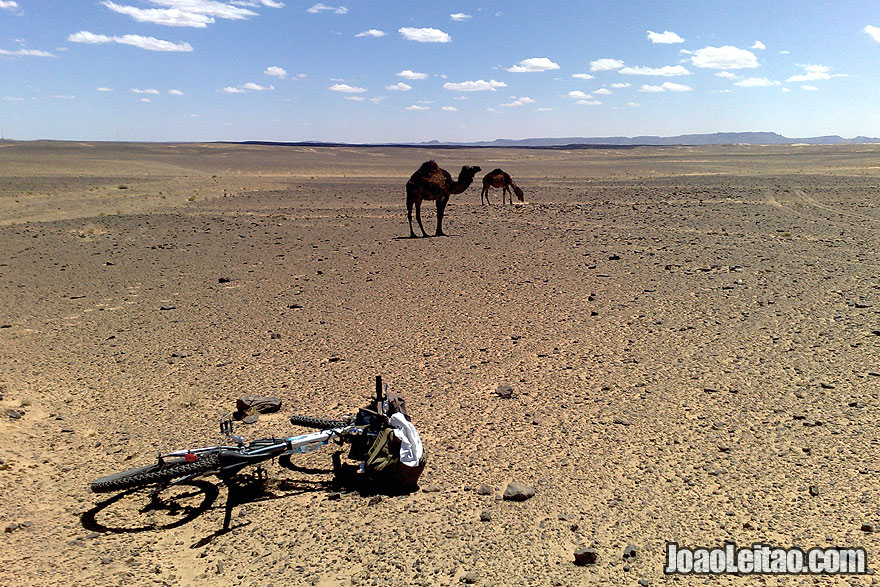 Mountain bike and camels in Sahara Desert