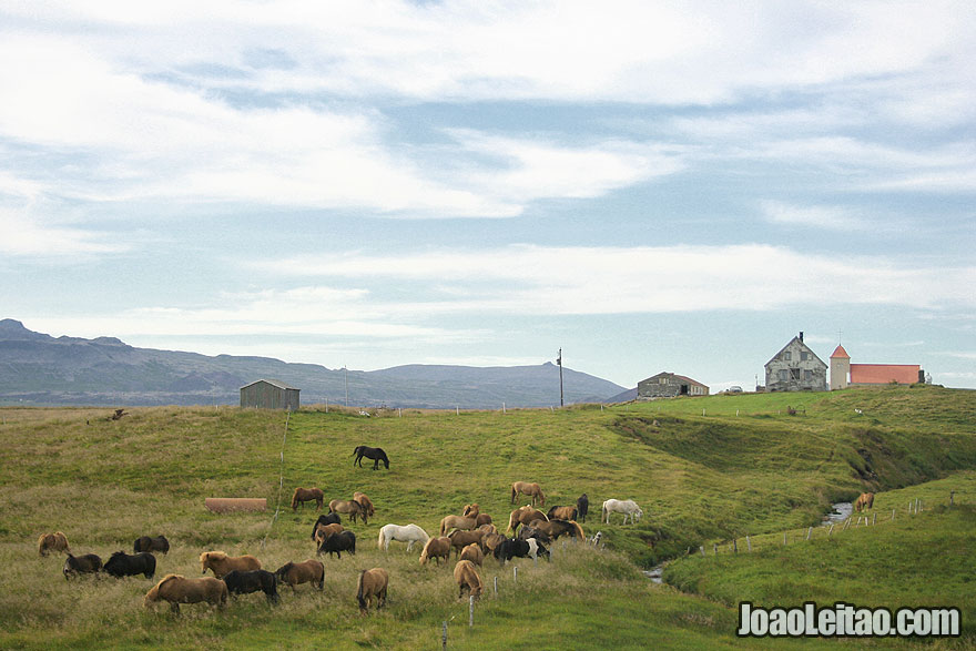 Visit Icelandic Horse Farm Western Region Iceland