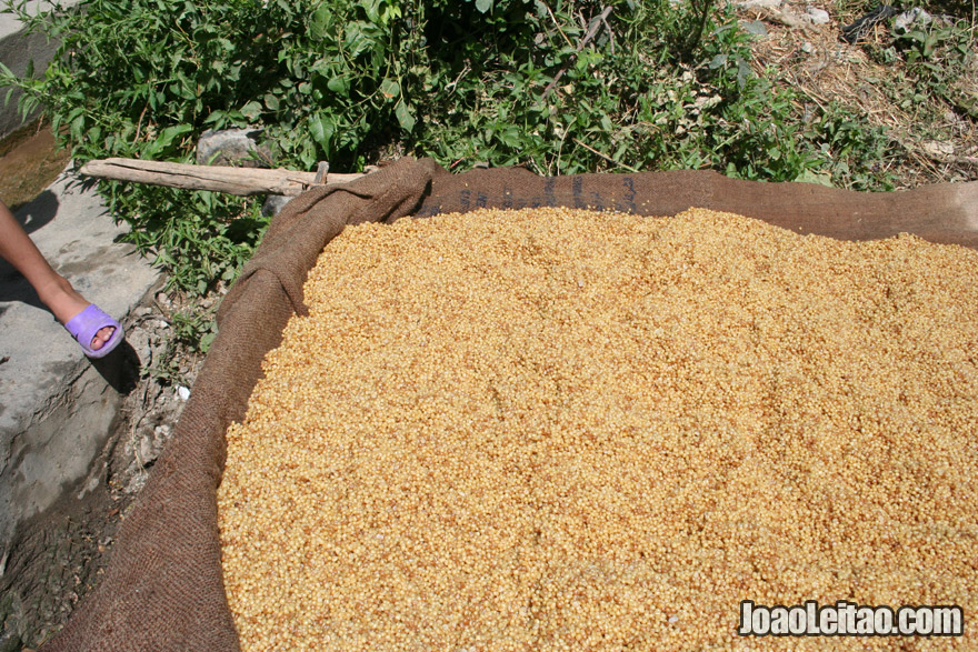 Preparing bulgur in Kani