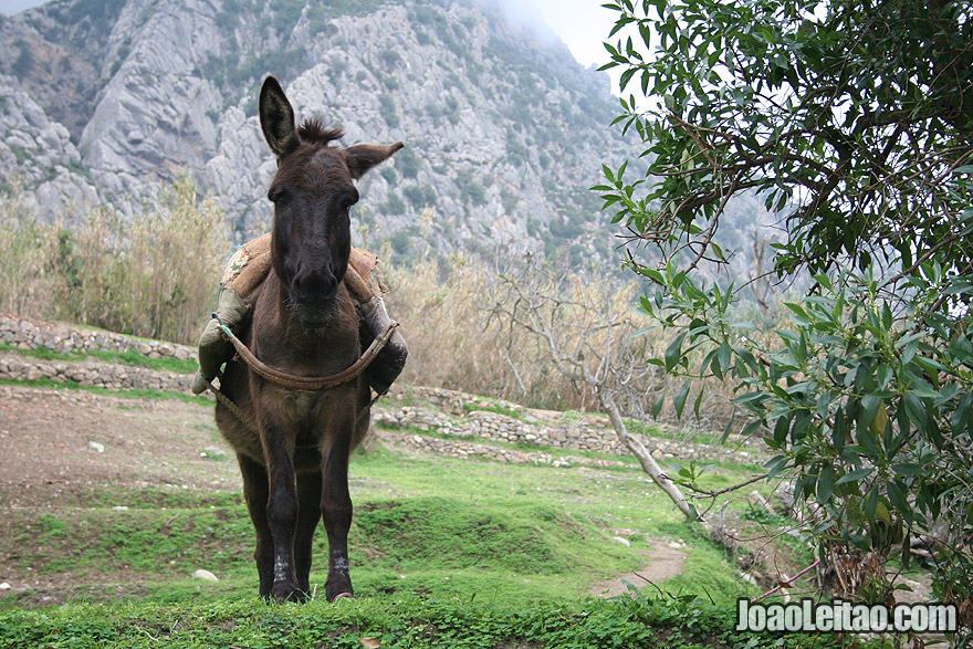 Donkey in Chefchaouen