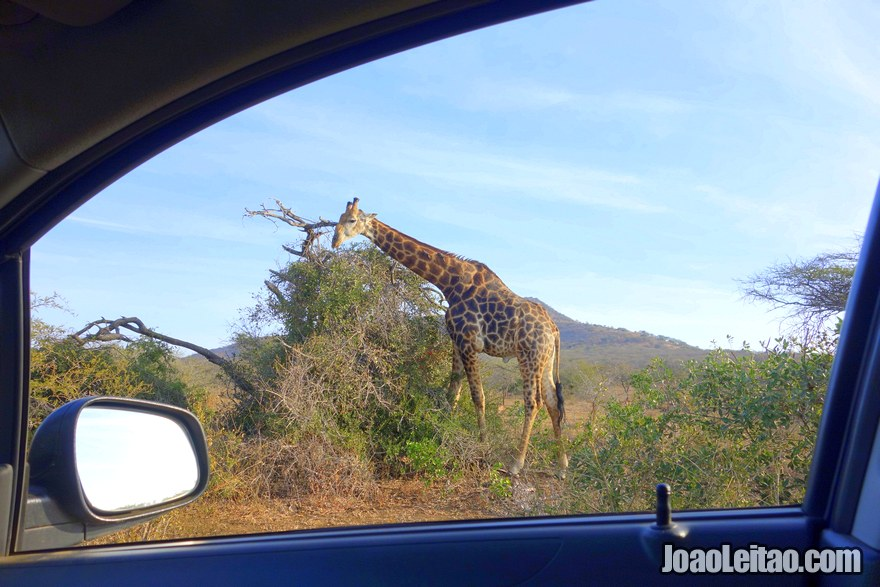 Self-Drive Safaris - how to do it on your own