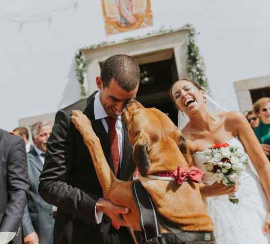 Fotógrafo casamento Aveiro Porto Braga Feira Joao Terra