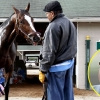 6 Entrepreneurs With A Horse In The Race