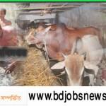 Jubo Unnayan Adhidaftar Admission Notice 2016 www.dyd.gov.bd