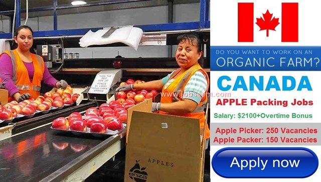 Apple Packer Jobs in CANADA Hiring Large Number of Staffs