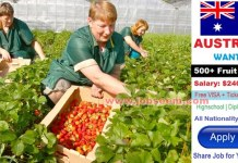 Fruit Picking Job Vacancies in AUSTRALIA with Accommodation and Free VISA 2018