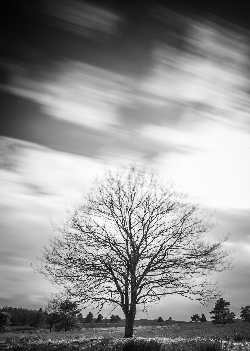 Mehlinger Heide – Baum #1