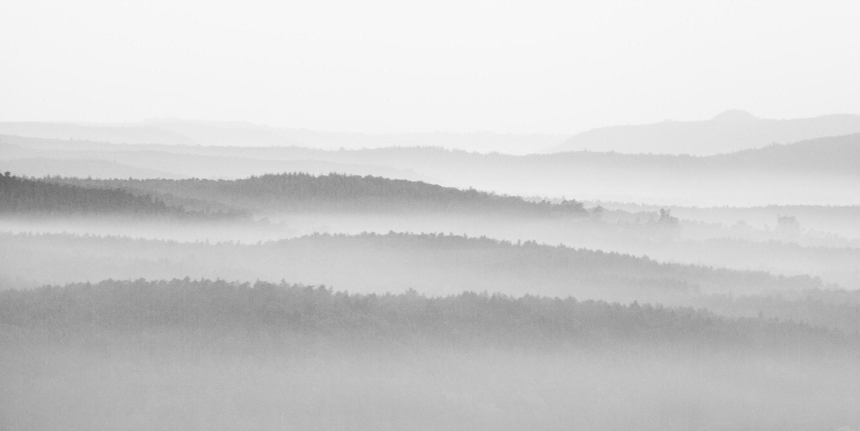 Pfälzer Wald, frühmorgens #1