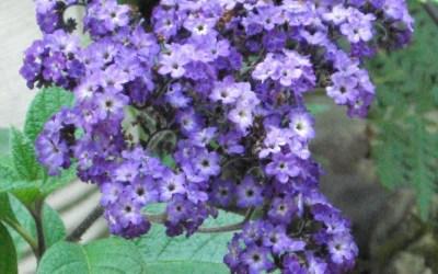 Blooming Again