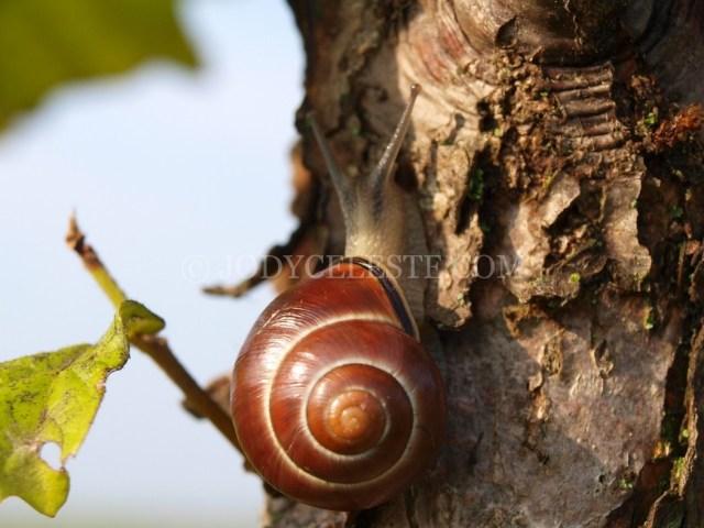 Snails on Leaves