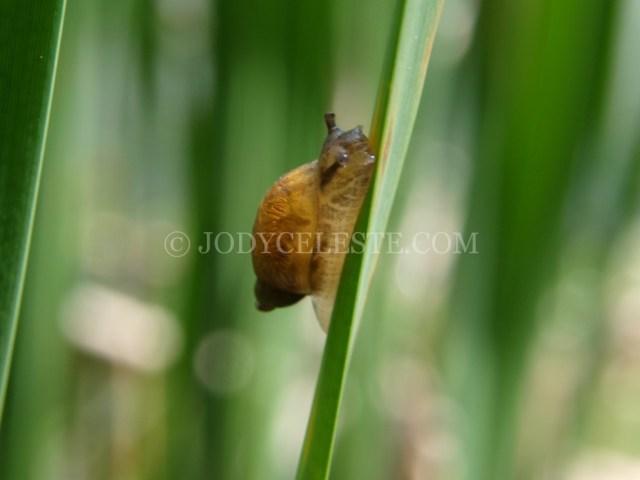 Snail on Grass Blade