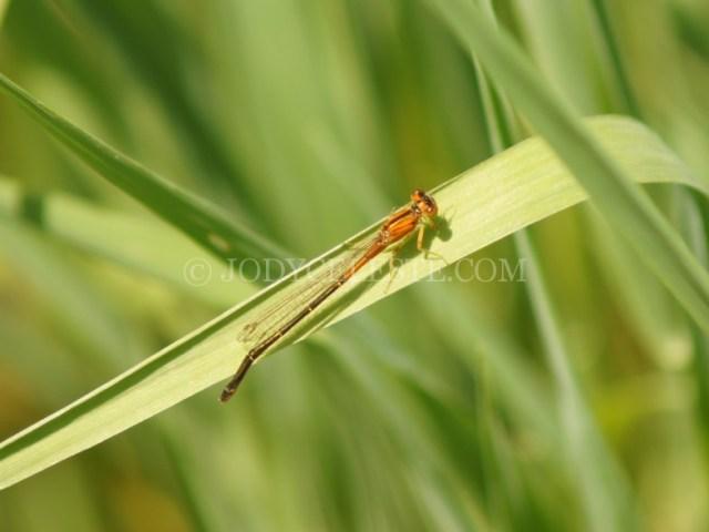 Darnerfly