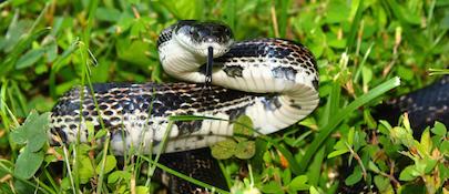 snake control chattanooga