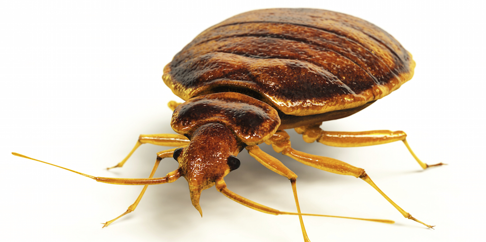 bed bug control chattanooga