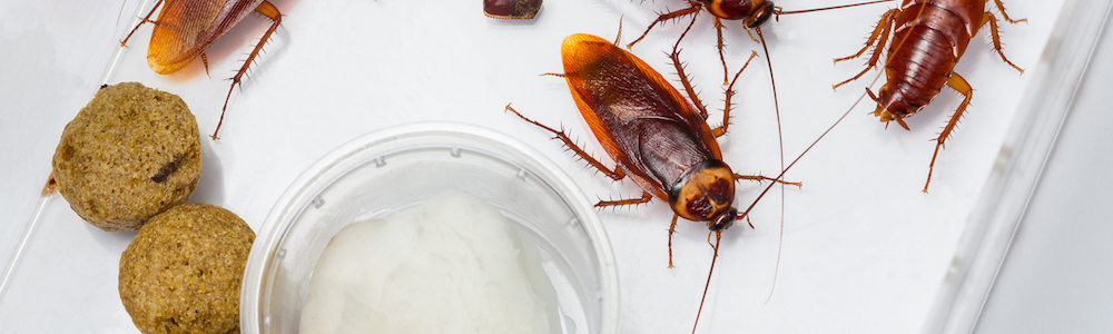 roach control chattanooga