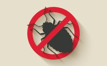 bed bug control Chattanooga