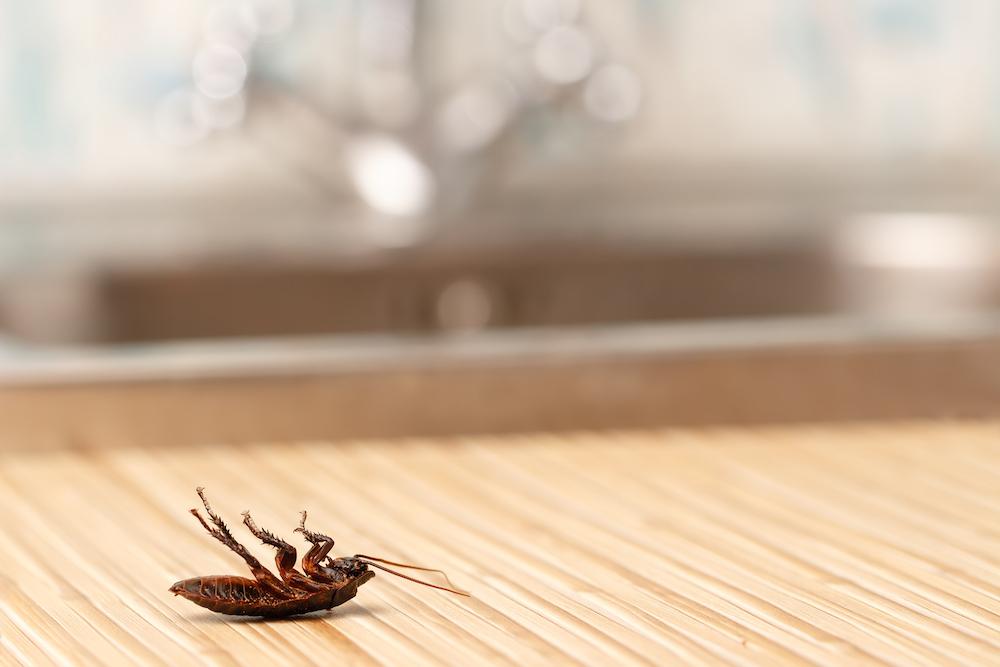 exterminator chattanooga tn