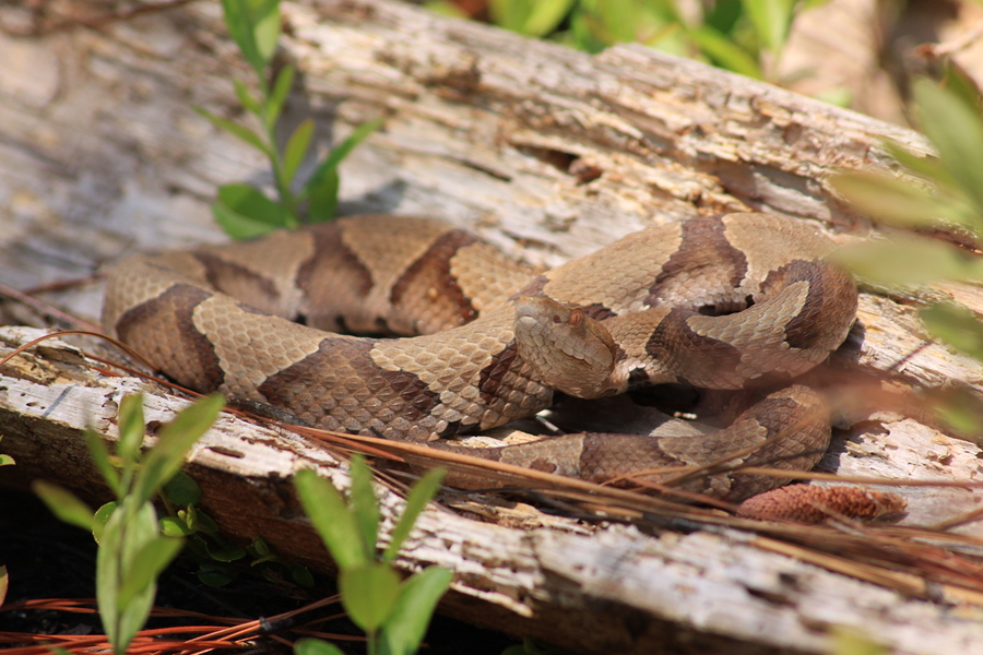 8 Common Snakes in Tennessee - Jody Millard Pest Control