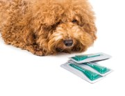 flea tick prevention