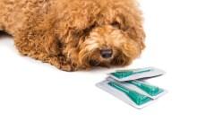 flea tick prevention