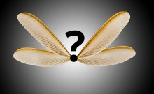 A question mark with the wings of a flying termite on a gray background