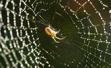 types of house spiders