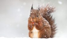 Winter Wildlife Prevention