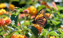 Friendly Pollinators